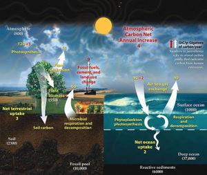 Kuva 1. Hiilikierto Maassa, ysiköinä gigatonnia hiiltä vuodessa.